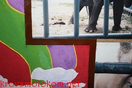 декорируем стены фотографиями животных